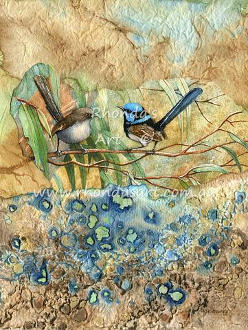 Blue Wrens M1
