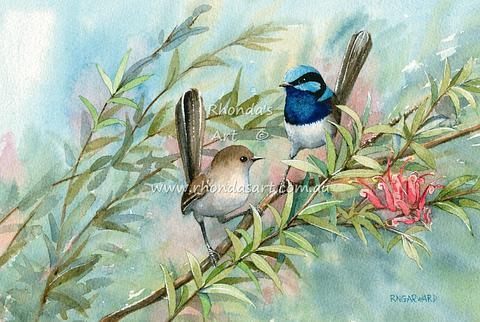 Blue Wrens 18