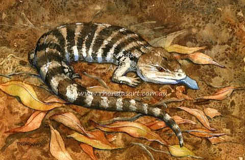 Bluetongue Lizard 1