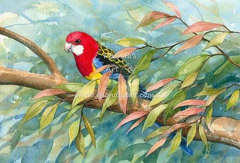 Eastern Rosellas 4