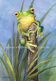Green Frog 1