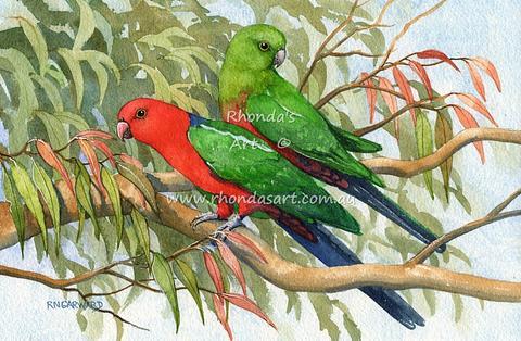 King Parrot 11