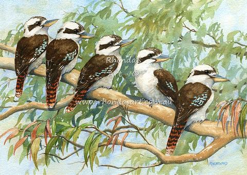 Kookaburras 44