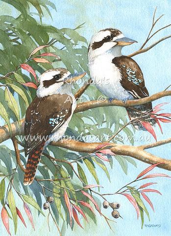 Kookaburras 55