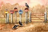 Magpies  5
