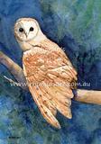 Masked Owl 1
