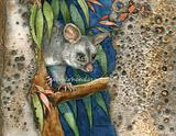 Brushtail Possum M1