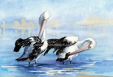 Pelicans preening 7
