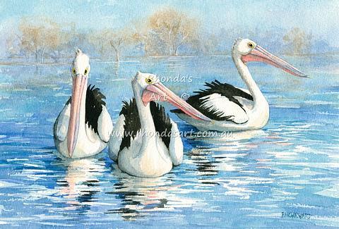 Pelicans swimming 34