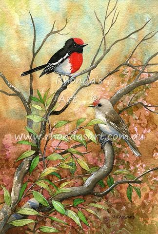 Red-capped Robins 2