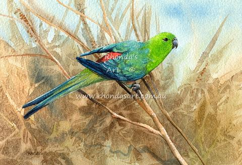Red-rumped Parrot 1