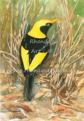Regent Bowerbird 1