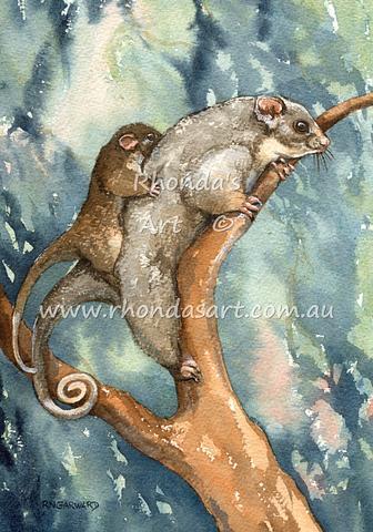 Ringtail Possum 2