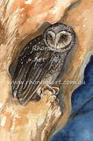 Sooty Owl 1