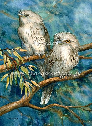Tawny Frogmouth adults 2