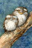 Tawny Frogmouths 1