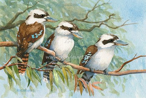 Three Kookaburras 37