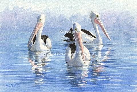 Three Pelicans swimming 8