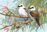 Two Kookaburras 54