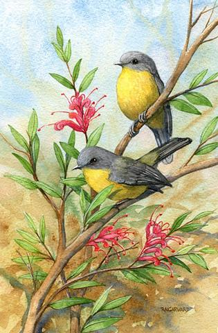 Eastern Yellow Robins 5