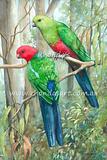 King Parrot 9