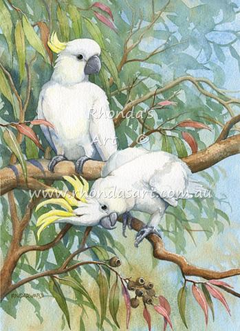 Sulphur-crested Cockatoo CL1
