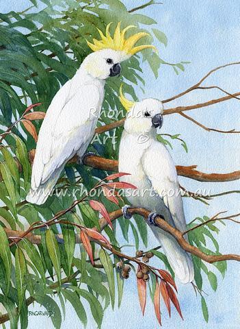 Sulphur-crested Cockatoo 15