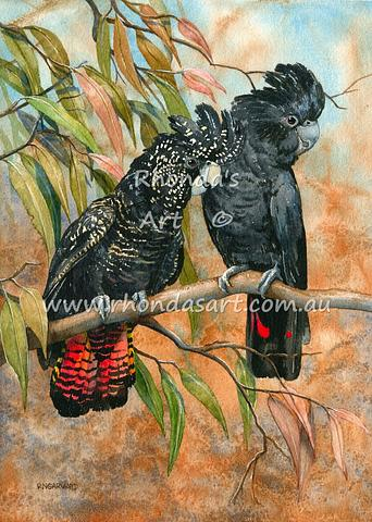 Red-tailed Black Cockatoos 1