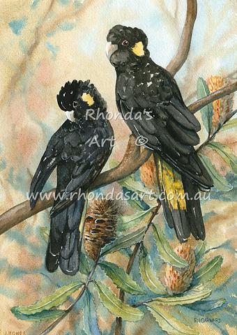 Yellow-tailed Black Cockatoos 1