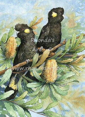 Yellow-tailed Black Cockatoos 3