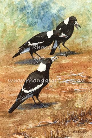 Magpies  8