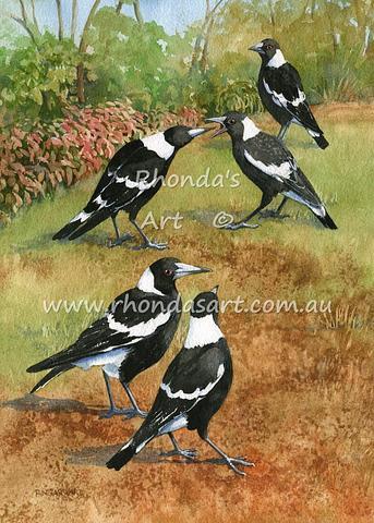 Magpies  27