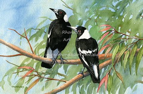 Magpies  28