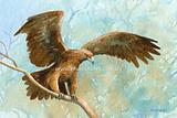 Wedge-tailed Eagle 3