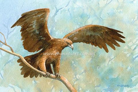 Wedge-tailed Eagle 3