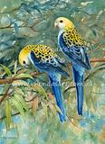 Pale-headed Rosellas 2