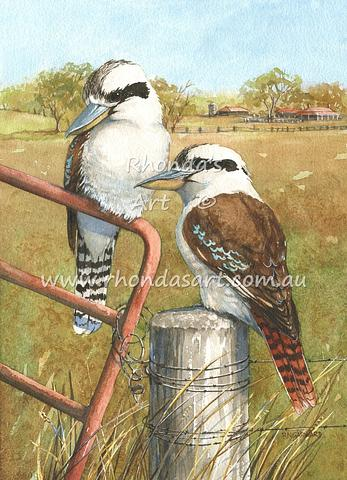 Kookaburras 47