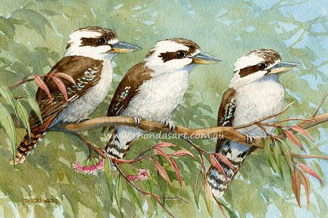 Three Kookaburras on a branch