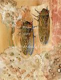 Good Season Cicadas