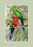 King Parrot 12