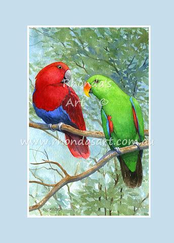 Eclectus Parrot 2