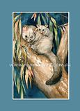 Brush-tail Possum 3