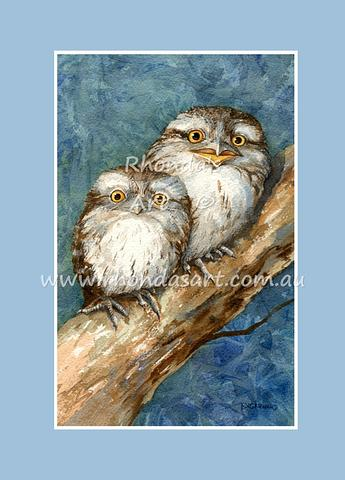 Tawny Frogmouth Babies 1