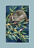 Ring-tail Possum 4