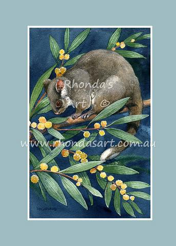 Ring-tail Possum 4