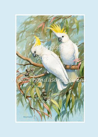 Sulphur-crested Cockatoo 10