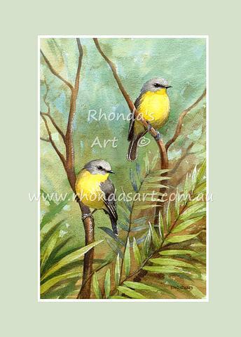 Eastern Yellow Robin 2