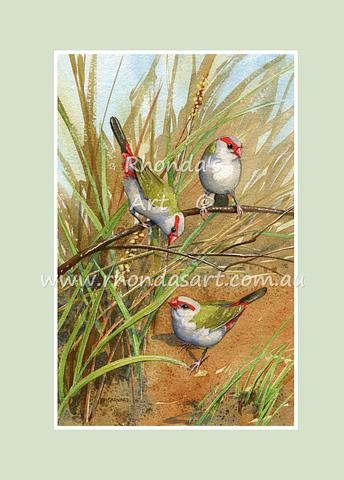 Red-browed Finches 4