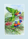 Rainbow Lorikeets 49