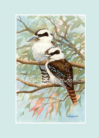 Kookaburra 23